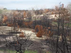 A bugaci leégett ősborókás