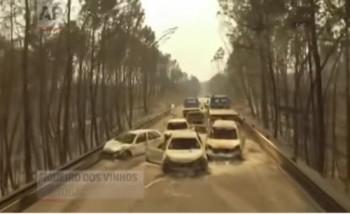 Portugál erdőtűz után